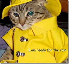 cat-rain-ready (Small)