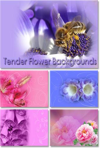 Нежные цветочные фоны для Photoshop