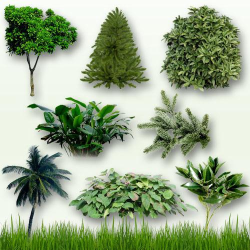 Клипарт - Деревья, кусты и трава