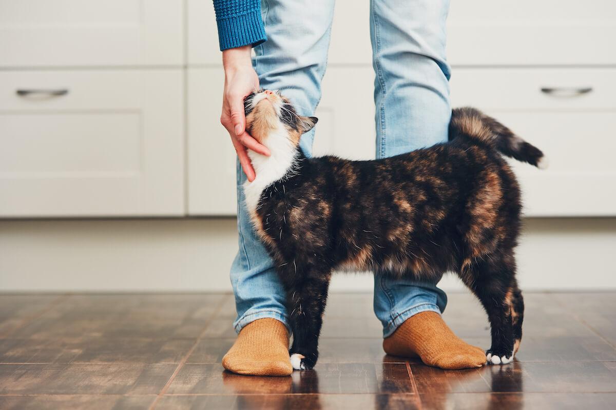 le territoire est important pour la stabilité émotionnelle des chats