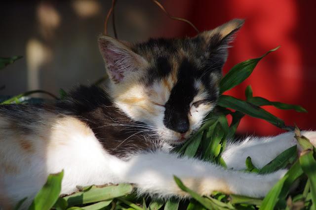 貓咪的午睡時光...