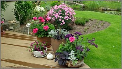 ogród, garden , donice
