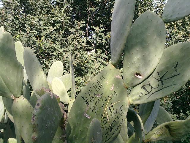 Scriere pe cactus
