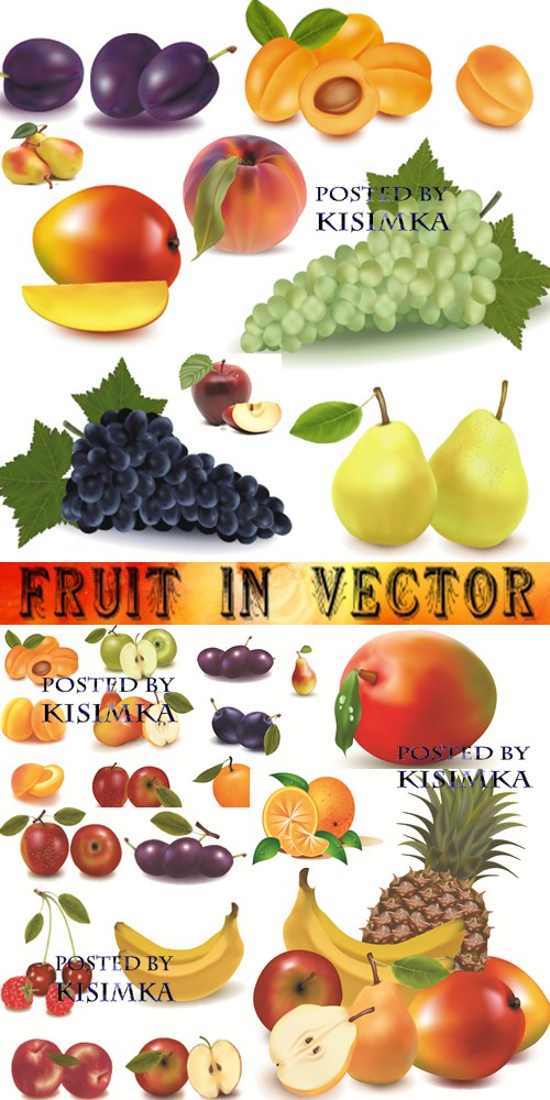 Stock: Fruit in vector 21