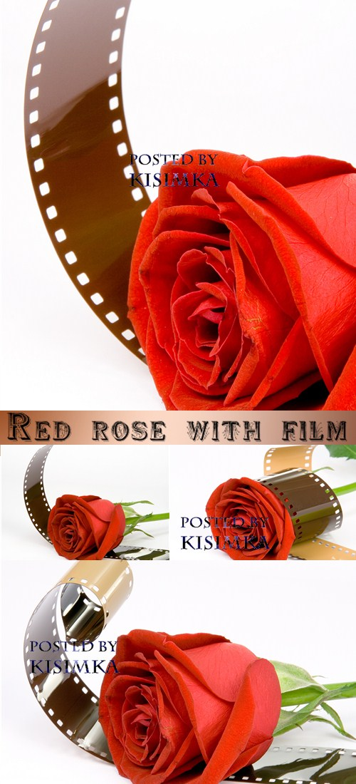 Stock Photo: Red rose with film