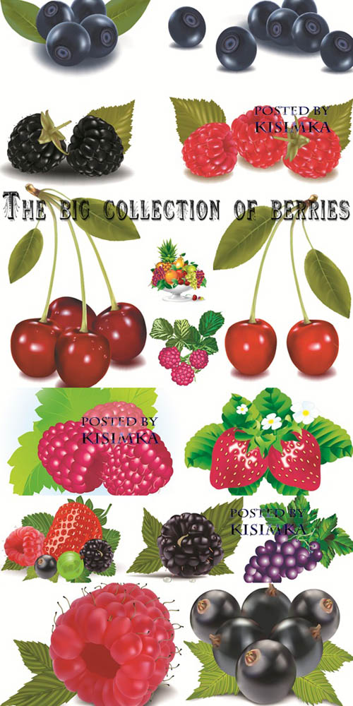 Stock: The big collection of berries in a vector