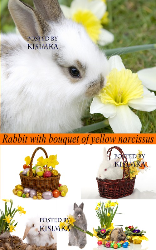 Stock Photo: Rabbit with bouquet of yellow narcissus
