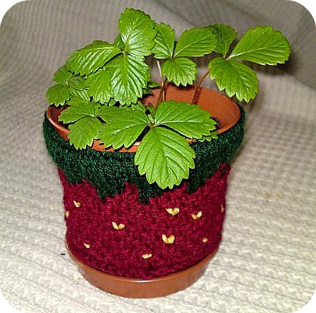 Strawberry Plant Pot Cosy photo