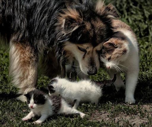 anjing bermain bersama kucing