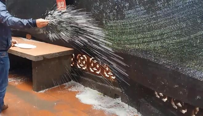 Cách rắc muối giải đen