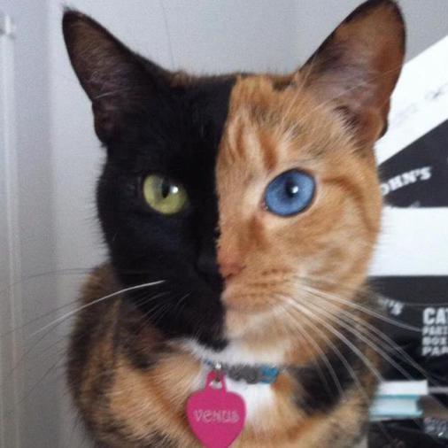 Fotos de animales con extrañas mutaciones genéticas