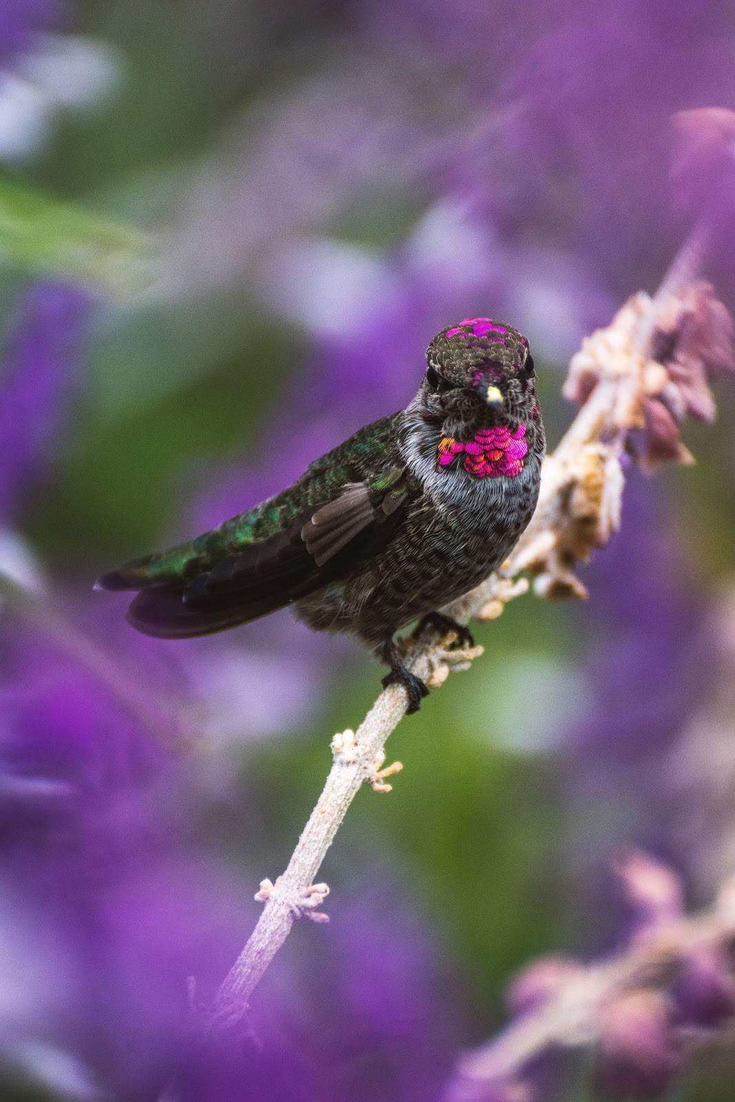 Bird surrounded by blurred purple flowers in the foreground