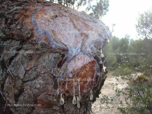 Locosuelto Dust, el maya dust propio DSC03189