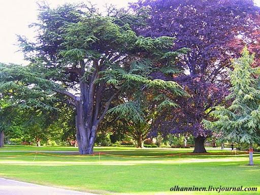Фиолетовые деревья в Ботаническом саду Крайстчерча