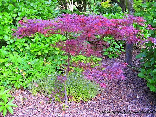 Обилие деревьев с разноцветной листвой в любое время года
