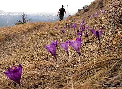 traseu trunghi rosu printre branduse violet