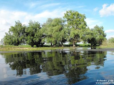 Delta Dunarii - salciile de la mal