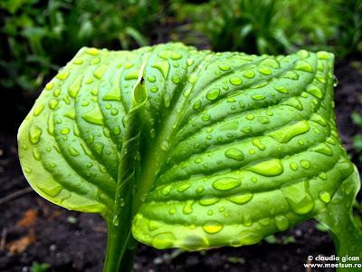 in gradina, dupa ploaie. verde crud