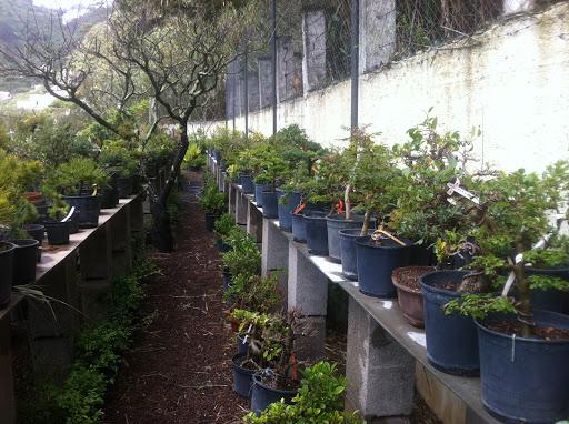 Visita al vivero bonsai el valle gran canaria for Viveros canarias