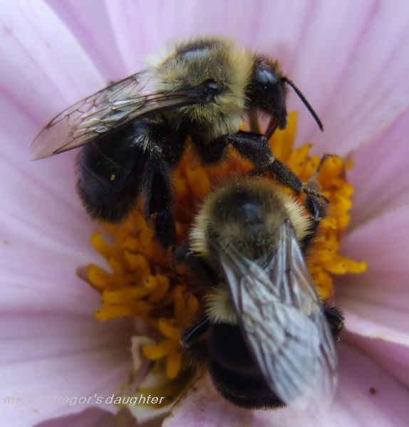 Like a Bee...