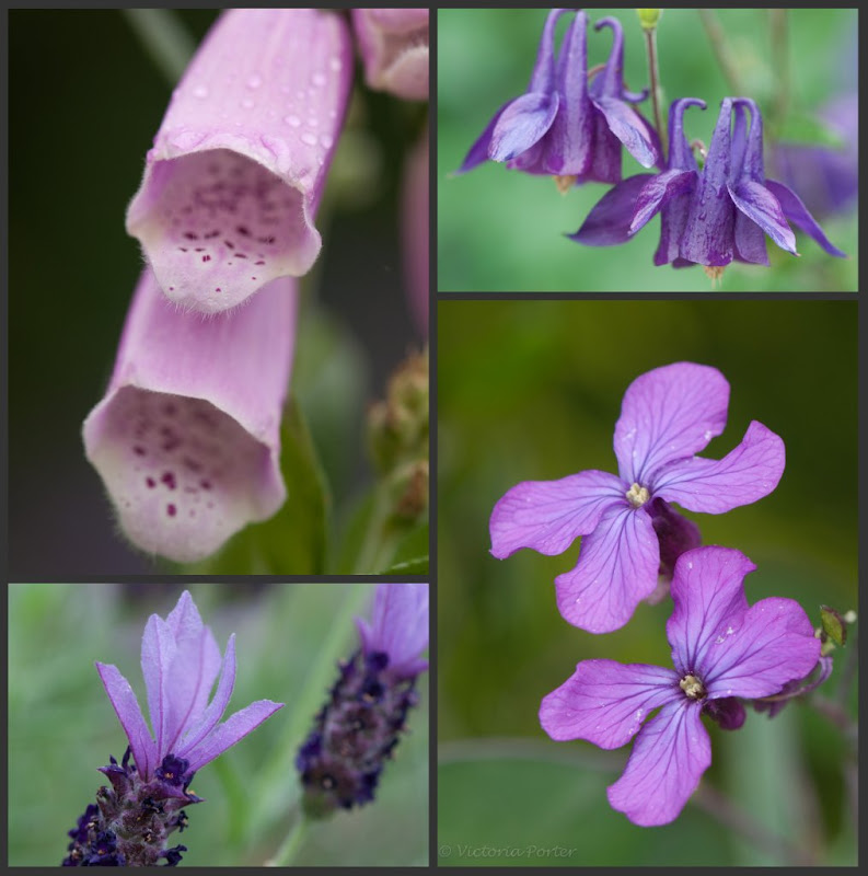 flower collage