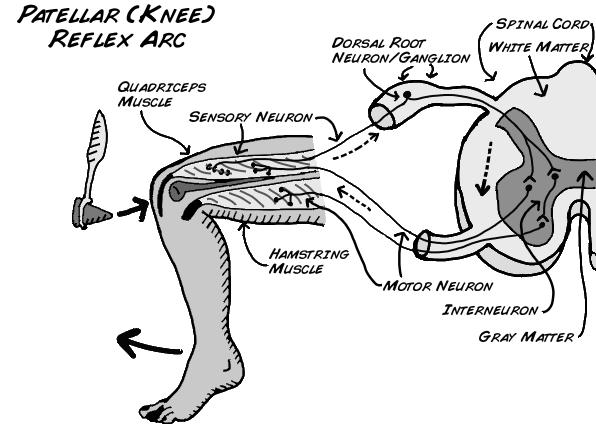 corneal reflex test