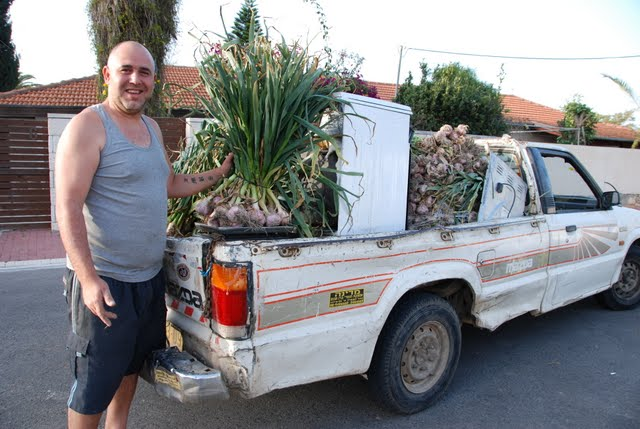 garlic mobile, fresh garlic , Israel