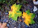 Fotos Gratis  Naturaleza - Hojas del árbol