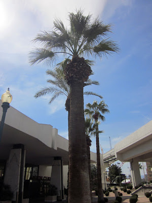 Palm tree Las Vegas photo