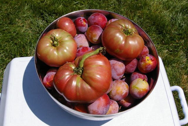 Cherokee Purple Tomatoes and Plums