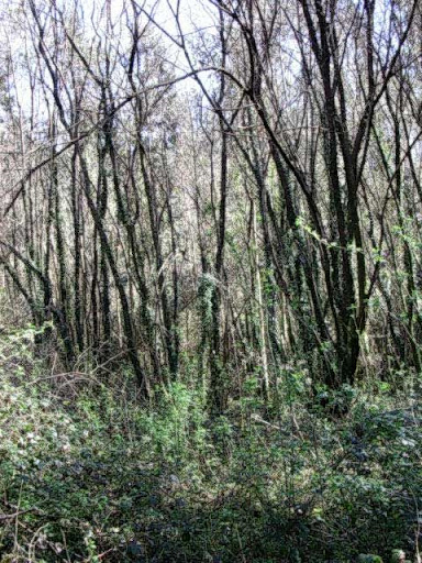 Paseo por el Rio Mandeo R%C3%ADo-Mandeo-7-el-bosque