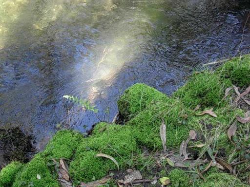 Paseo por el Rio Mandeo R%C3%ADo-Mandeo-15-musgo-en-las-piedras