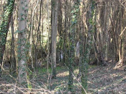 Paseo por el Rio Mandeo R%C3%ADo-Mandeo-23-bosque