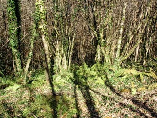 Paseo por el Rio Mandeo R%C3%ADo-Mandeo-27-el-bosque-verde