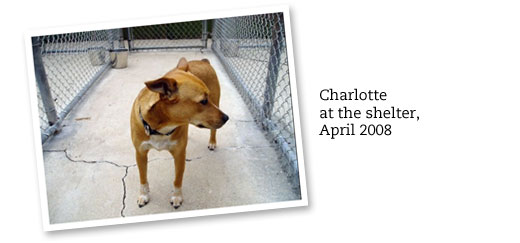 Free printable dog adoption kit chickabug nothing makes me happier than seeing charlotte wag that little bit of a tail i love her so and im proud that shes an adopted dog solutioingenieria Image collections