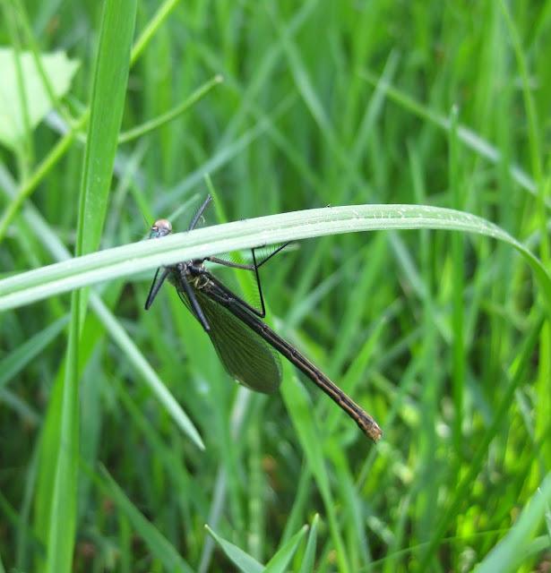 Slike insekata- buba IMG_7592