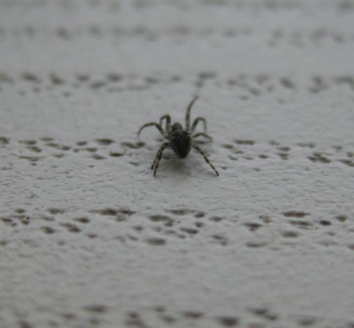 Slike insekata- buba IMG_3453