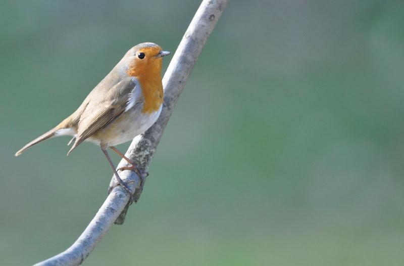 quelque oiseaux du jardin DSC_0102