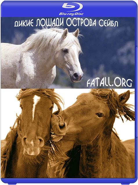 Дикие лошади острова Сейбл / Chasing wild horses (2008) HDTV 1080i
