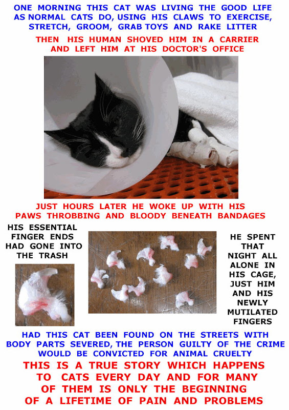poster on declawing cats