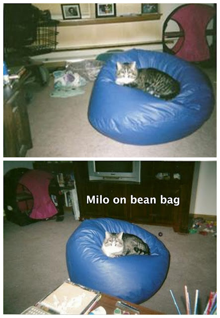 cat on bean bag