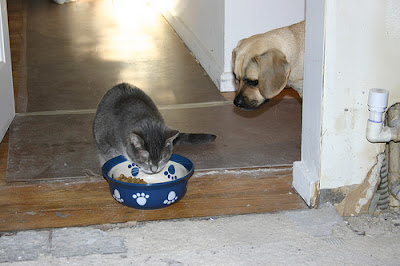 not dogs eating cat food but cat eating dog food