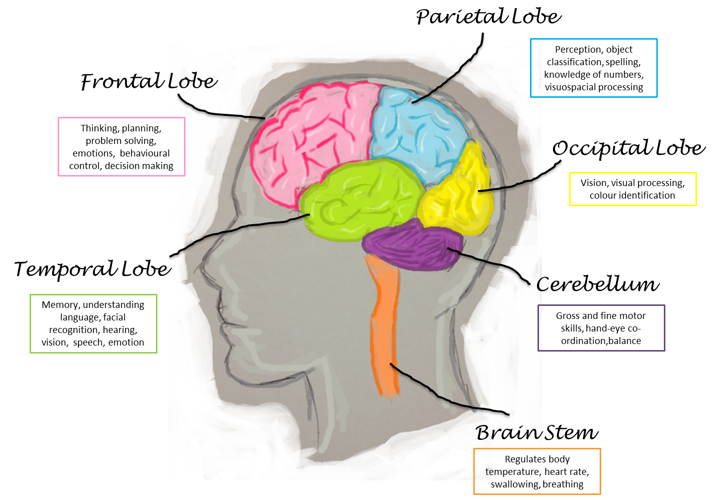 human-brain.png