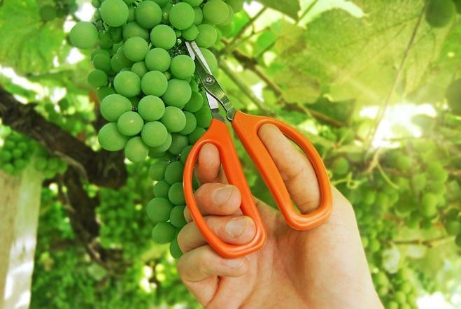 Frutas verduras e legumes  Descrição gerada automaticamente com confiança média