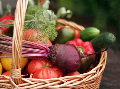 SGA offers innovative garden curricula