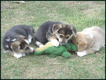 Ataque de Perros