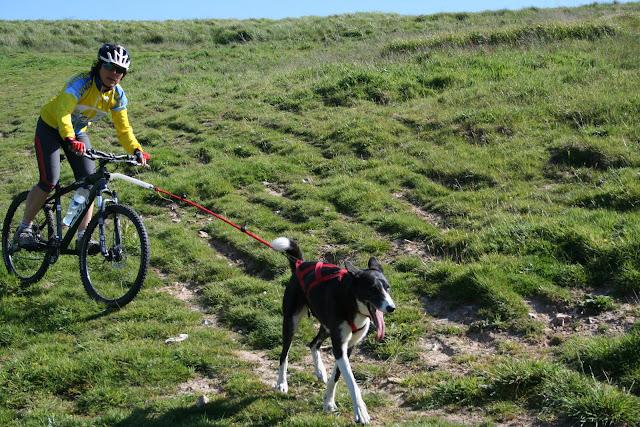 Les canicrosseurs sans leurs chiens