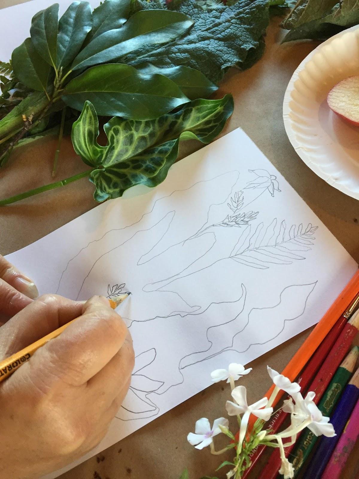 Starting Botanical Illustration.JPG