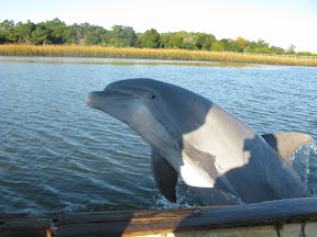 dolphin watching tours from captain source