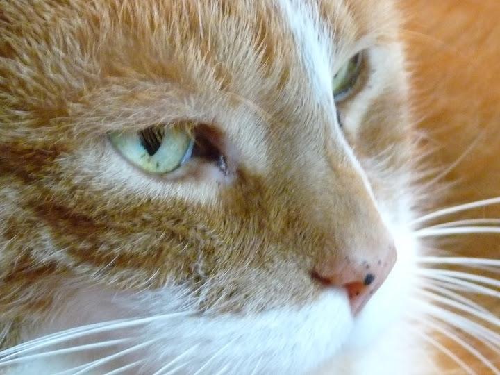 Pablo (1999-2011)